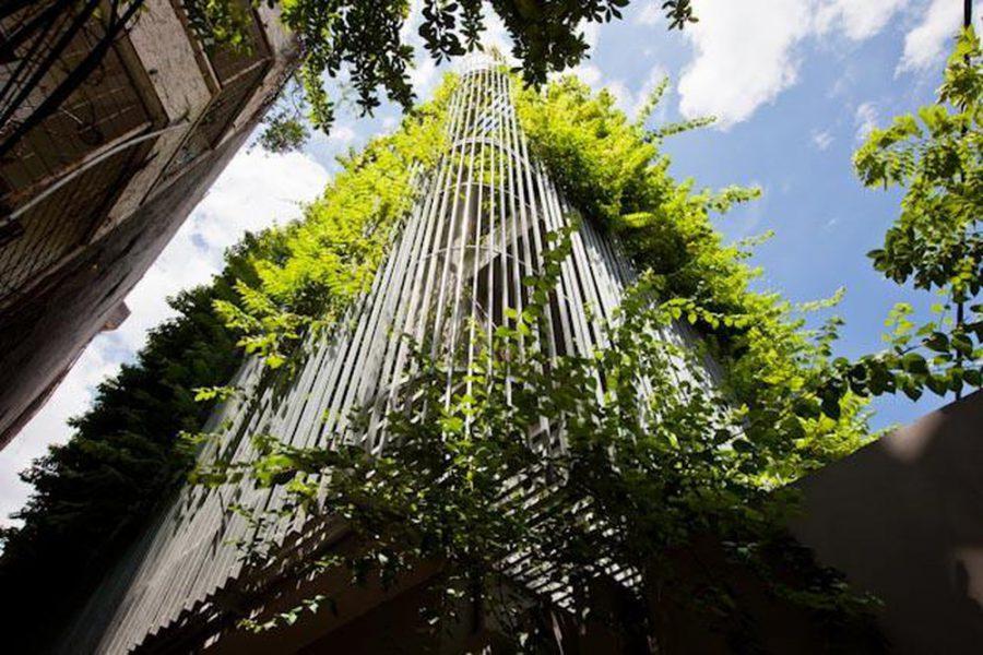 Cây xanh trong nhà giúp giảm tránh nắng nóng