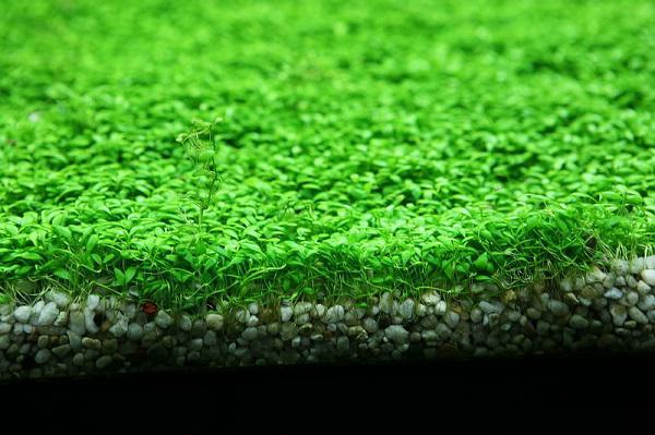những loại cây sống dưới nước