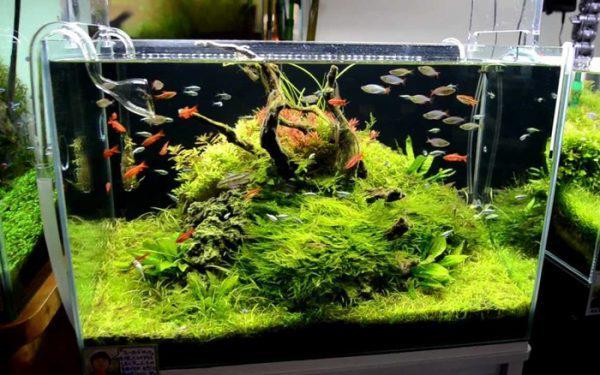các loại cây sống dưới nước