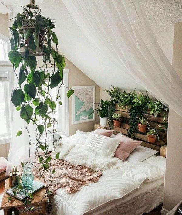 Giảm nhiệt độ phòng bằng cây xanh