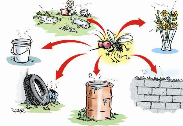 loại bỏ nơi sinh sản của muỗi