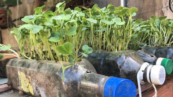 trồng rau sạch trên sân thượng nhà phố
