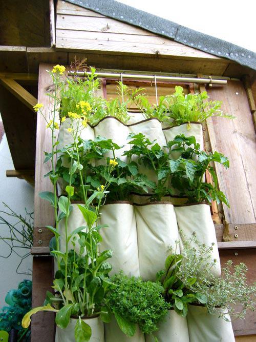 trồng rau sạch trên sân thượng nhà phố bằng túi treo tiết kiệm diện tích