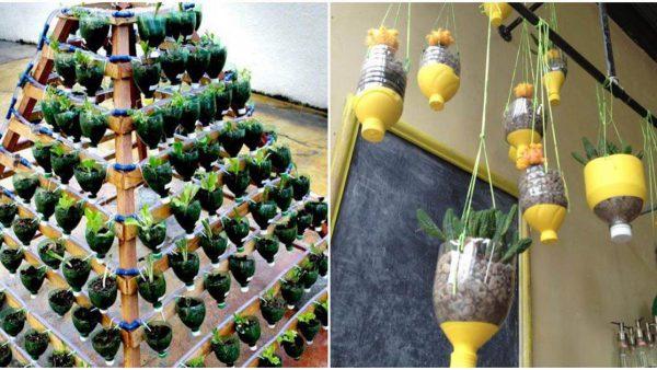 trồng rau trong nhà ống