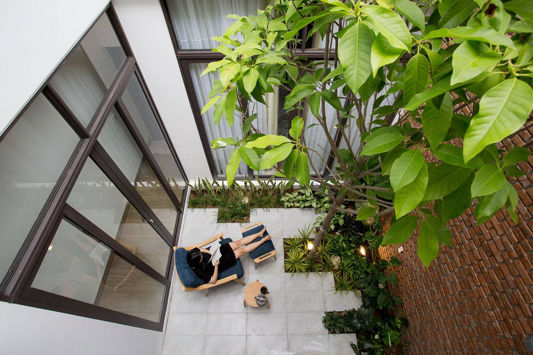 cây ngọc lan trồng trong nhà