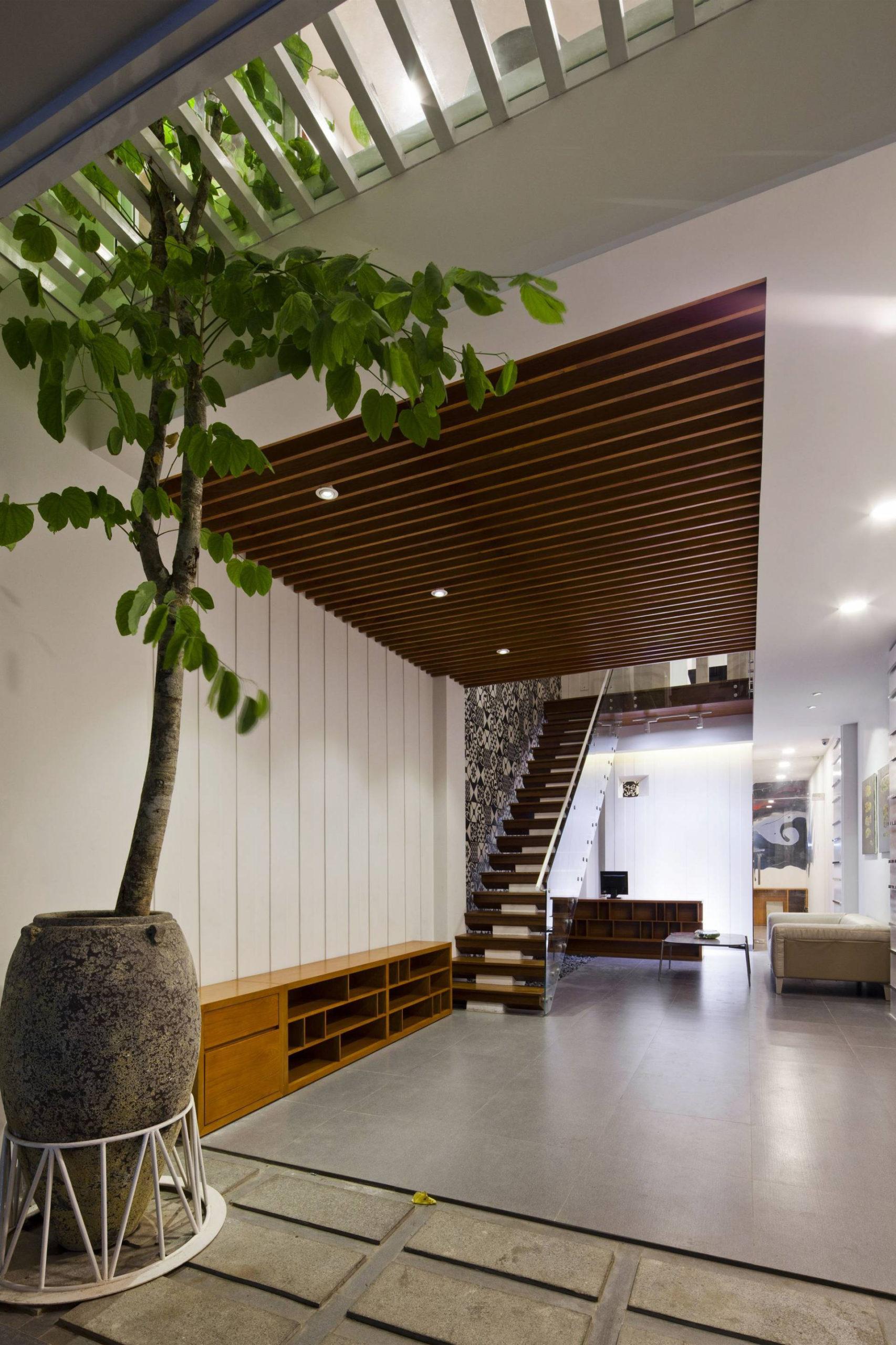 những loại cây thân gỗ trồng trong nhà