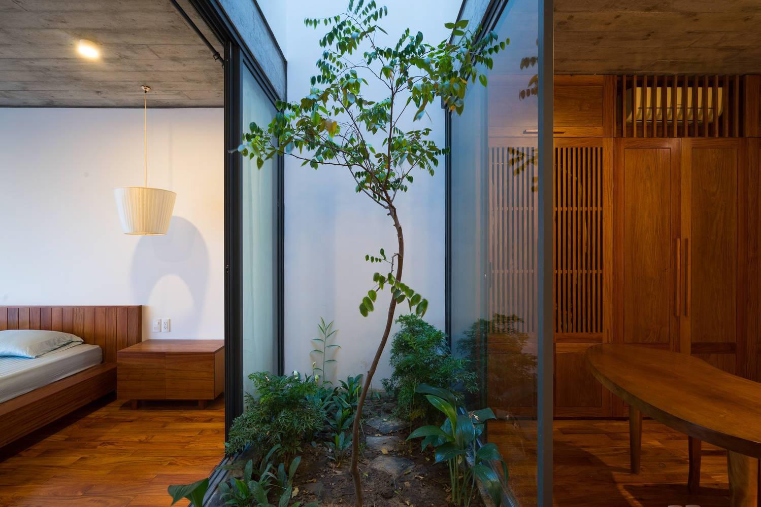 Cây khế trồng dưới giếng trời trong nhà.