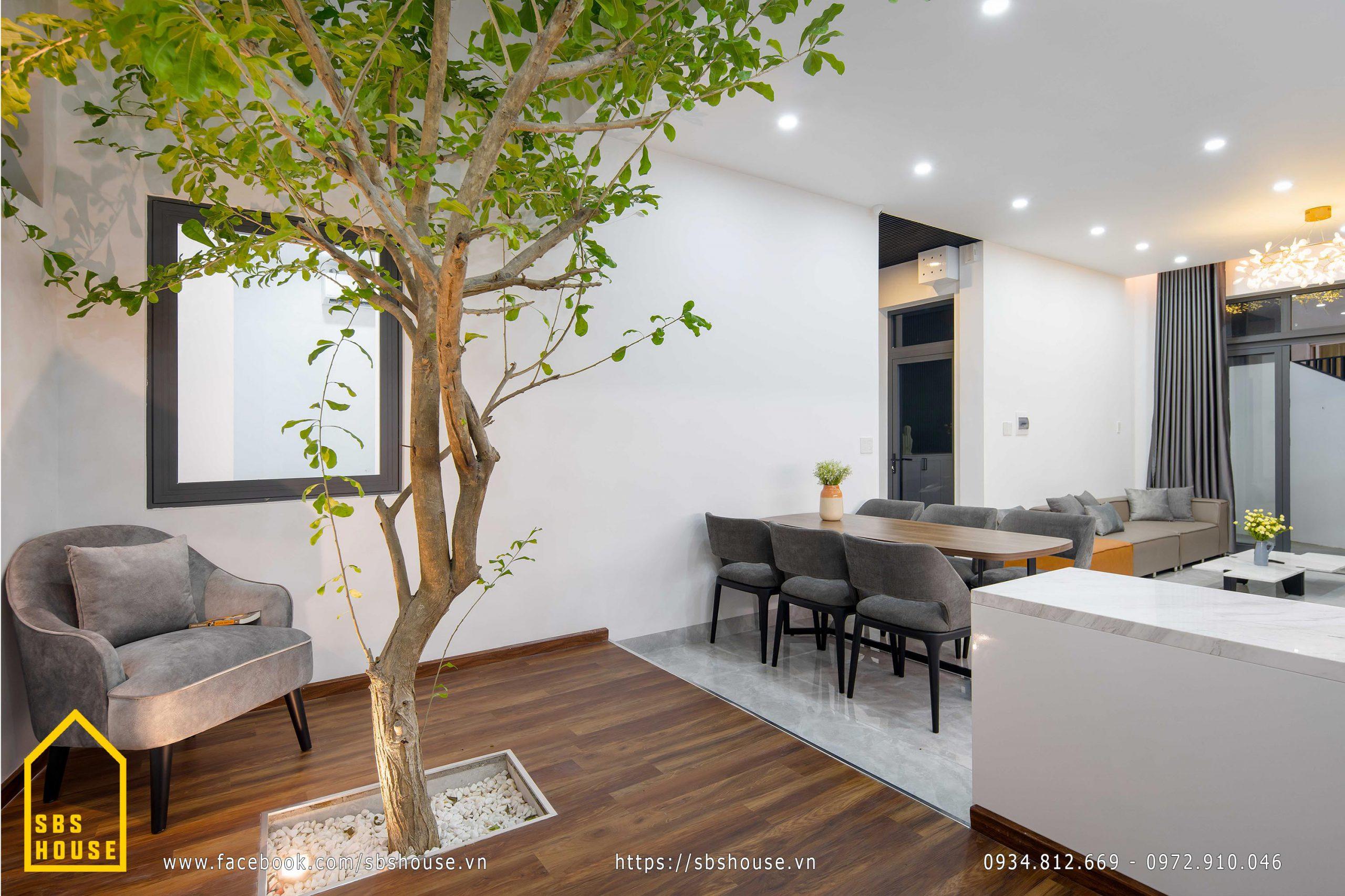 Cây đào tiên cảnh trồng trong nhà.